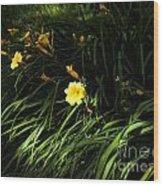 Victoria Park-7 Wood Print