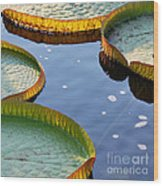 Victoria Waterlilies Wood Print