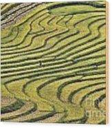 Vietnam Sapa Iv Wood Print