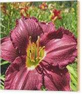 Viette's Daylily. Dark Purple 01 Wood Print