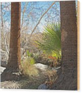 View From Creek Bed In Andreas Canyon In Indian Canyons-ca Wood Print
