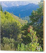 View From Trail To West Point Inn On Mount Tamalpais-california  Wood Print