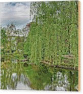 View Of A Botanical Garden, Krakow Wood Print
