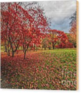 View Of Autumn Wood Print
