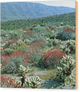 View Of Desert Wild Flowers And Cacti Wood Print