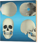 View Of Human Skull From Different Wood Print