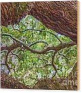 View Through Angel Oak Tree Wood Print