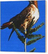 Vigilant Hawk Wood Print