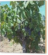 Villa Toscano Vineyards Wood Print by Susan Woodward