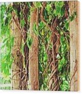 Vine 2 Wood Print