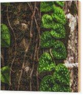 Vine Growing On Tree Wood Print by Al Andersen