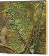 Vine On Tree Bark Wood Print