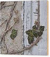 Vine On Wall Wood Print