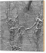 Vines After Snow In Black And White Wood Print