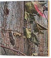 Vines And Barns Wood Print