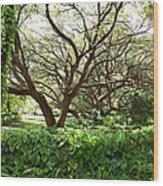 Vines And Oaks Wood Print