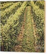 Vines Growing In Vineyard Wood Print