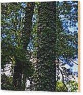 Vines In The Swamp Wood Print