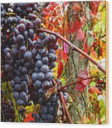 Vines Of October Wood Print by Roger Bailey