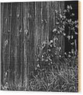 Vines On The Shed Wood Print