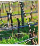 Vines On Wire 22637 Wood Print
