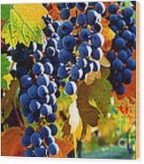 Vineyard 2 Wood Print
