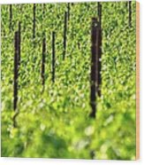 Vineyard 24056 Wood Print
