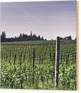 Vineyard 24077 Wood Print