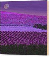 Vineyard 40 Wood Print