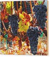 Vineyard 8 Wood Print