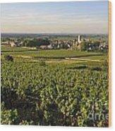 Vineyard And Village Of Pommard. Cote D'or. Route Des Grands Crus. Burgundy.france. Europe Wood Print