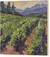Vineyard At Dentelles Wood Print