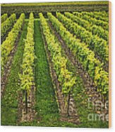 Vineyard Wood Print by Elena Elisseeva