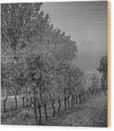 Vineyard Fog Wood Print