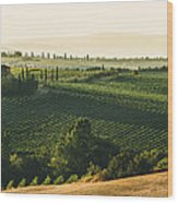Vineyard From Above Wood Print