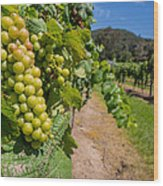 Vineyard Grapes Wood Print