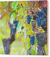 Vineyard Grapes Ready For Harvest Wood Print