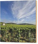 Vineyard Hut. Vineyard. Cote De Beaune. Burgundy. France. Europe Wood Print