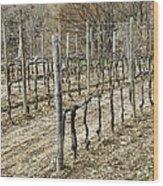 Vineyard In Early Spring Wood Print