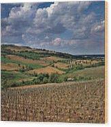 Vineyard In Frushka Gora. Serbia Wood Print