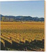 Vineyard In Nz Wood Print