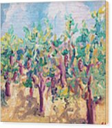 Vineyard In The Afternoon Sun Wood Print