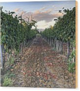 Vineyard In Tuscany Wood Print