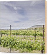 Vineyard Landscape In Maryhill Washington State Wood Print