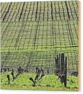 Vineyard Lines 23036 Wood Print