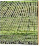 Vineyard Lines 23048 Wood Print