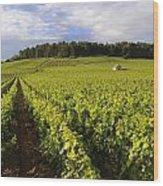 Vineyard Near Monthelie. Burgundy. France. Europe Wood Print