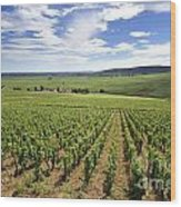 Vineyard Of Cotes De Beaune. Cote D'or. Burgundy. France. Europe Wood Print