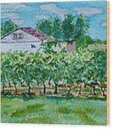 Vineyard Of Ontario 2 Wood Print
