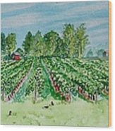 Vineyard Of Ontario Canada 1 Wood Print
